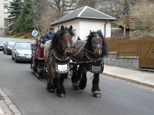 Kutsche mit Kaltblütern